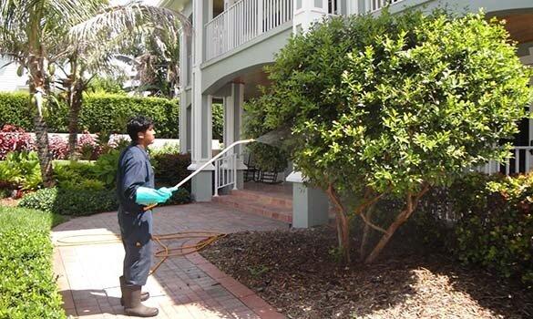 Tree Care Service in Stuart : What a Good Program Looks Like
