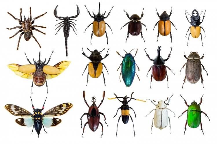 Common Household Bugs