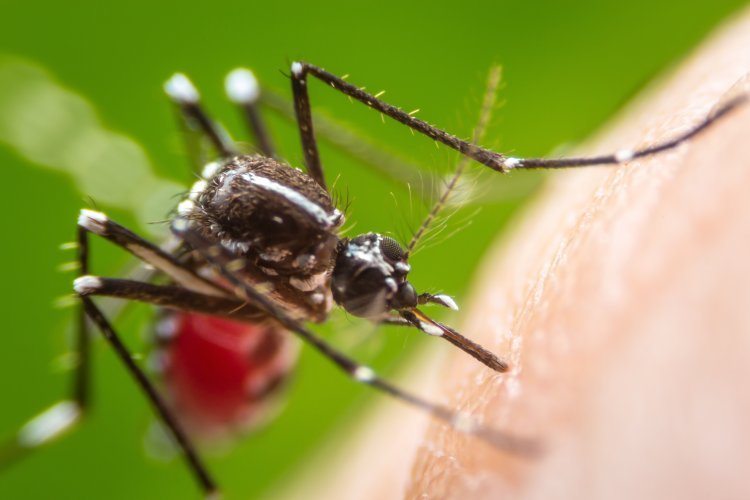 Five Environmentally Friendly Ways to Keep Mosquitos Out of Your Home