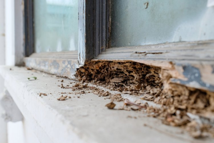 Signs termites are in or around your home