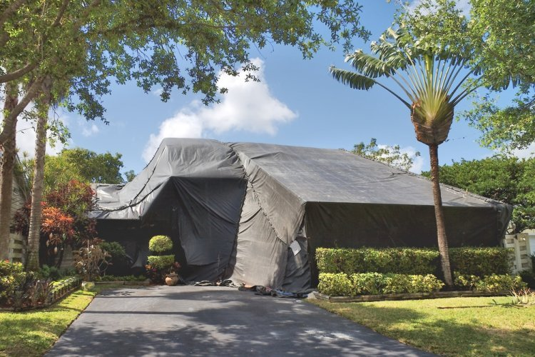 Must Haves For Pest Management Service in St. Lucie