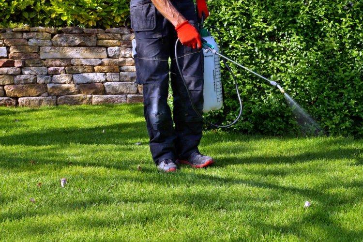 4 Reasons You Should Consider Pest Management Services