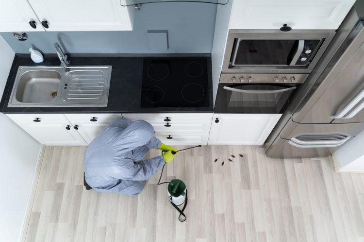 4 Advantages of Pest Control Services