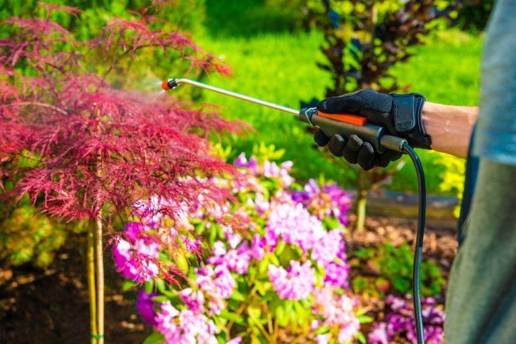 4 Reasons You Need Garden Pest Control