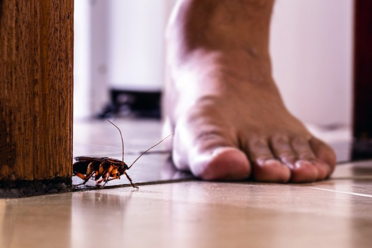 What to Expect from Residential Pest Control Service