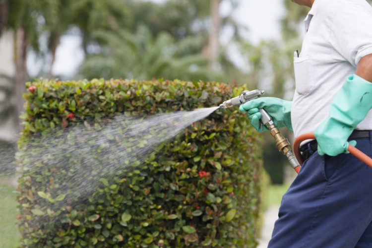 Services You Didn't Know You Needed From Pest Control Specialists